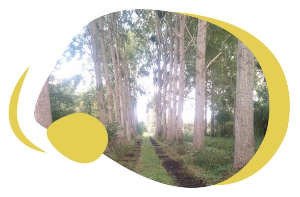Achat de bois Graignes-Mesnil-Angot